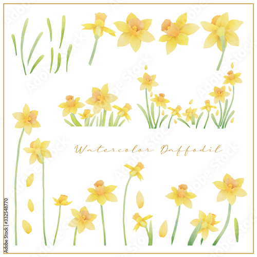 Photo Watercolor daffodil flowers collection vector