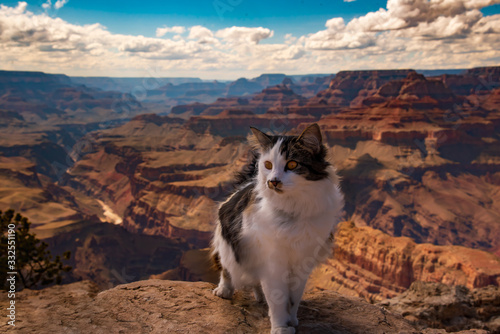 Photo Gertie the adventure cat in one of the most amazing places on earth, The Grand Canyon in Arizona