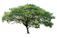 Tree Isolated On White Backgro...