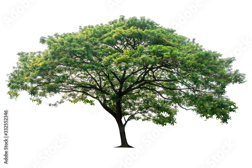 Photo Tree isolated on white background, nature background.
