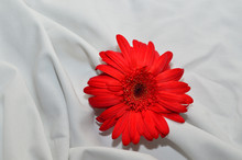 Orange Flower On White 2