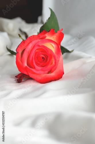 Blended rose 2