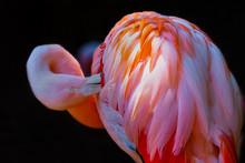 The Glowing Flamingo In The Dark