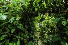 Tourist In Rainforest Inside V...