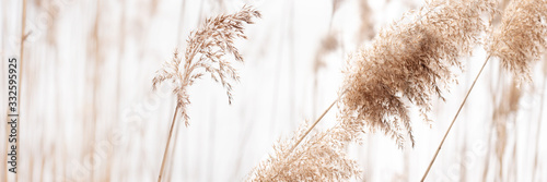 Fototapeta Field of dry brown grass close-up on natural background. obraz