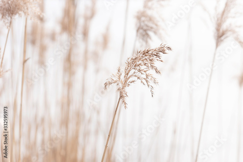 Obrazy brązowe  field-of-dry-brown-grass-close-up-on-natural-background