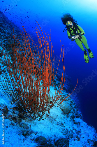 Sea whip coral underwater in the coral reef Canvas Print