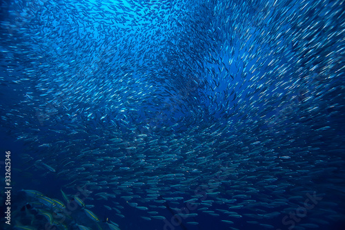 scad jamb under water / sea ecosystem, large school of fish on a blue background Fototapeta