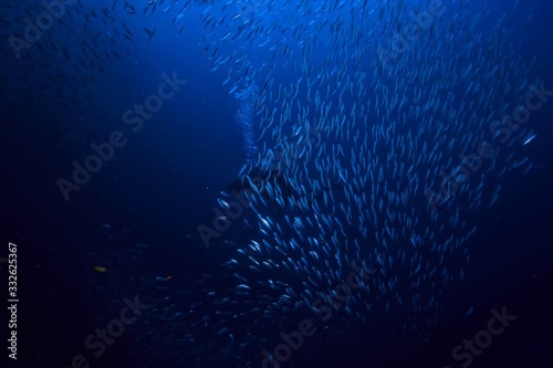 Fényképezés scad jamb under water / sea ecosystem, large school of fish on a blue background