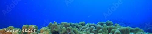 coral reef underwater / lagoon with corals, underwater landscape, snorkeling tri Canvas Print