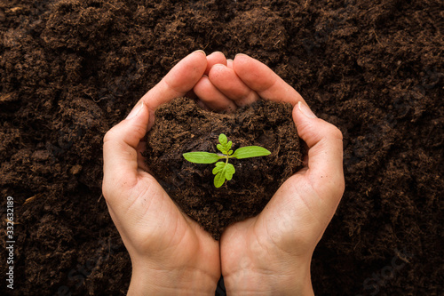 Fototapeta Young woman hands holding green, small tomato plant with ground. Early spring preparations for garden season. Closeup. Point of view shot. Top down view. obraz