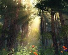 Rays Of The Sun Through The Tr...