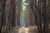 road in the coniferous forest on a spring sunny day in Ukraine to the cities of Dnieper