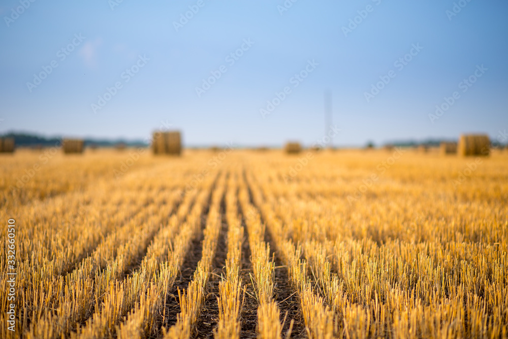 Fototapeta Hay bale. Agriculture field with sky. Rural nature in the farm land. Straw on the meadow. Wheat yellow golden harvest in summer. Countryside natural landscape. Grain crop, harvesting.