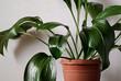 canvas print picture - Closeup on a green aspidistra plant in a pot
