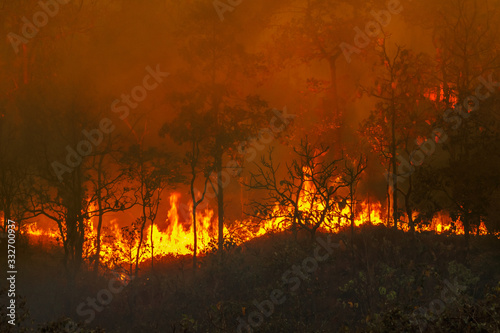 Fotografía Rain forest fire disaster is burning caused by humans