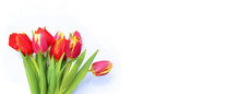 Bright Tulips On A White Backg...