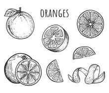Fresh Ripe Oranges Fruit Set