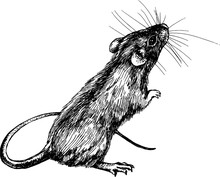 New Year Mouse, Rat Clip Art G...