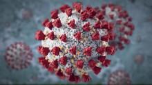 Corona Virus Closeup
