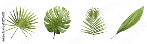 Set of different fresh tropical leaves on white background Canvas Print