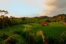 Rice Terrace In Rural Area Dur...