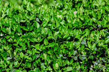 Textured Natural Background Of...