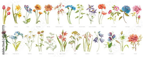 Fototapeta Watercolor collection of hand drawn flowers and herbs