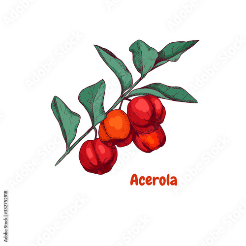 Hand drawn acerola berries on a branch Wallpaper Mural
