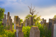 The Old Jewish Cemetery At Col...
