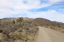 Travel Routes In The Southern Mojave Desert Section Of Joshua Tree National Park Are Surrounded By Native Plant Communities, Including Desert Queen Mine Road.