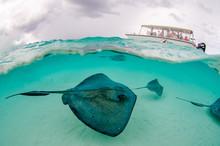 The Underwater Marine Animals ...