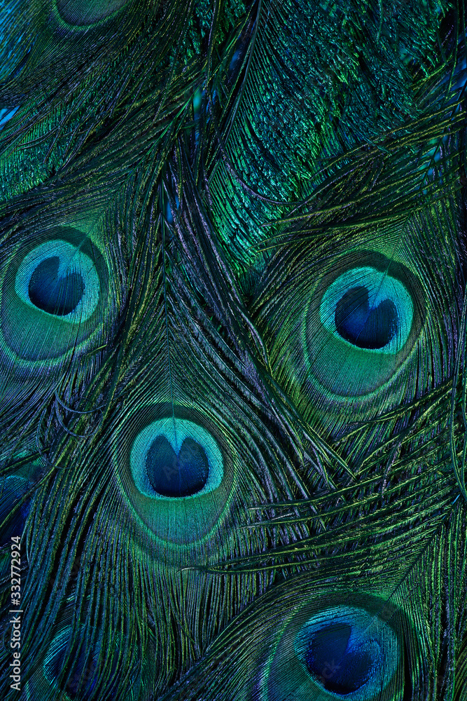 Vintage Peacock feather background. Abstract style background. Vintage natural pattern. Feather pattern. Exotic bird.