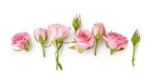 Rose Flowers On White Backgrou...