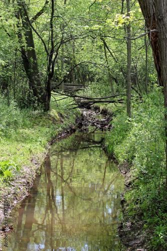 Spring Scene in the Woods