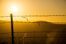 Barbed Wire At Sunrise