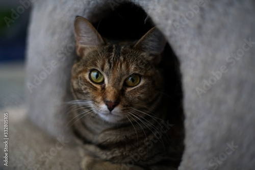 Cat sitting casual resting inside home eyes staring
