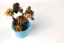 Flowers In Dry Pots That Die R...