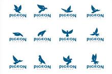 Pigeon Bird Logo Icon Pack