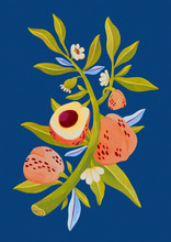 Peach Plant Illustration On Bl...