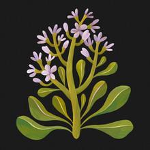 Purple Flowers On Black Background, Botanical Illustration, Flowers Painting
