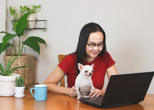 Woman Wearing Eye Glasses  And Red T-shirt Sitting At Wooden Table Indoor With Computer Notebook , Chihuahua Dog,blue Cup Of Coffee And Plant Pots, Working From Home Concept.