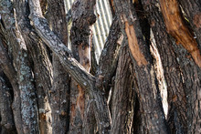 Vertical Logs With Bark, Sawn Tree Trunks Stand Close To Each Other. Creating A Wall From Natural And Natural Timber