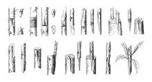 Tree Grafting Methode / Vintag...
