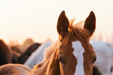 Troupeau des chevaux au pré