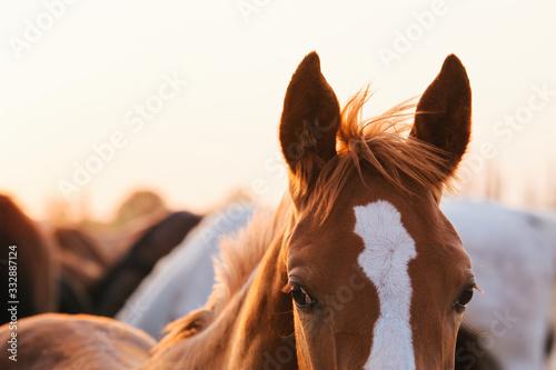 Fotomural Troupeau des chevaux au pré