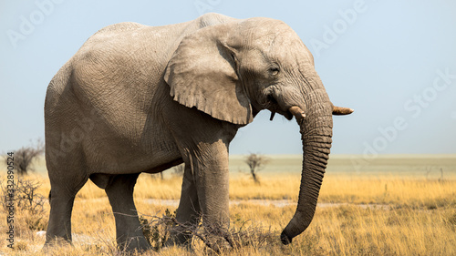 Elephants in the savannah, Etosha national park, Namibia Wallpaper Mural