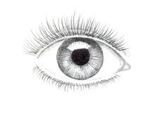 Illustration Of Human Eye Draw...