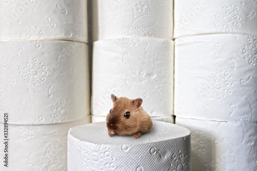 Cuadros en Lienzo Hamster hamstert Klopapier
