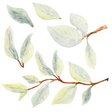 Apple Blossom Watercolor Leaves